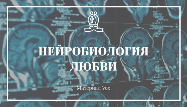 Нейробиология любви