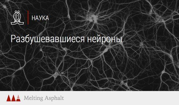 Секс и нейроны