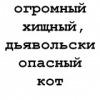 Кот Мефодий