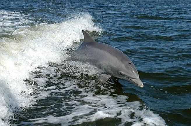 Дельфины узнают себя в зеркале. Фото: NASA