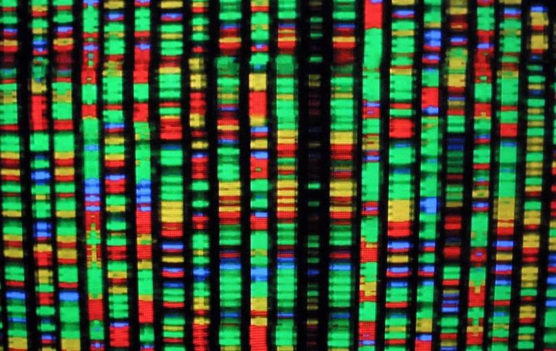 Биссексуальность геи генетика